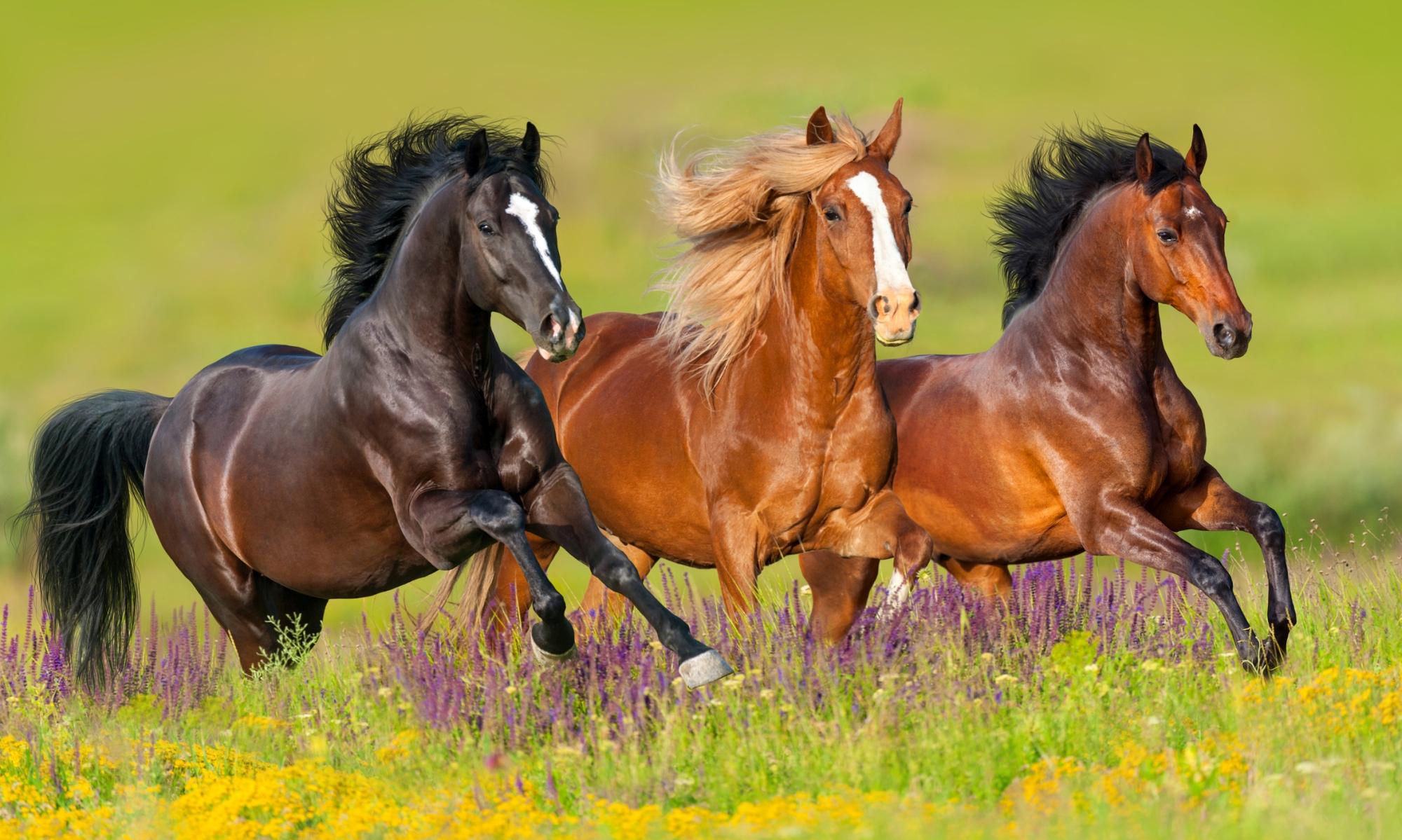 Pferdeklug der Pferdeblog